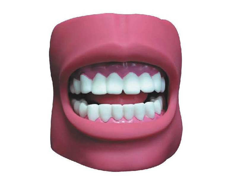 KAR/K4 Dental Care Model(with Cheek)